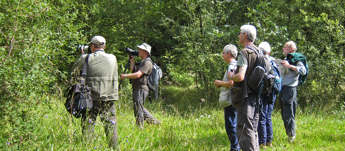 Hunting for the Brown Hairstreak at Bernwood Forest in 2008. © 2020 Steven Cheshire.