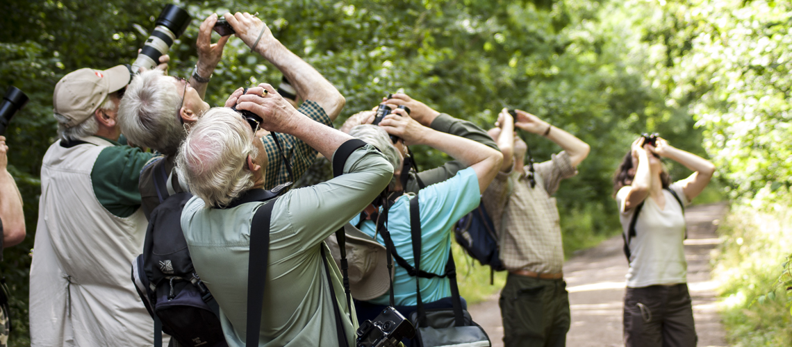 The search for the Purple Emperor at Fermyn Wood, Northamptonshire in 2009. © 2020 Steven Cheshire.