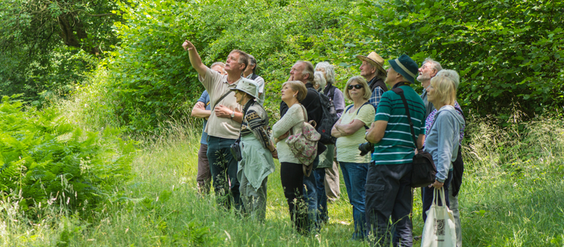 Looking for White-letter Hairstreak in Ryton Wood in 2015. © 2020 Steven Cheshire.