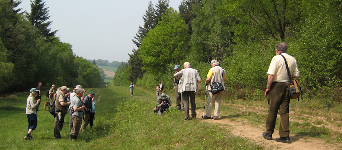 Searching for the Pearl-bordered Fritillary in the Wyre Forest in 2008. © 2020 Steven Cheshire.