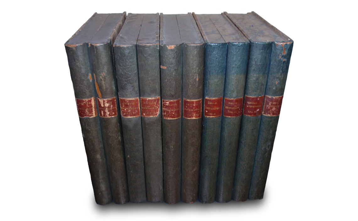 The remaining five from the original six cases. Each case designed to look like two volumes of of British Entomology when closed and stored on a bookshelf. Photo © 2020 Mike Mead-Briggs.