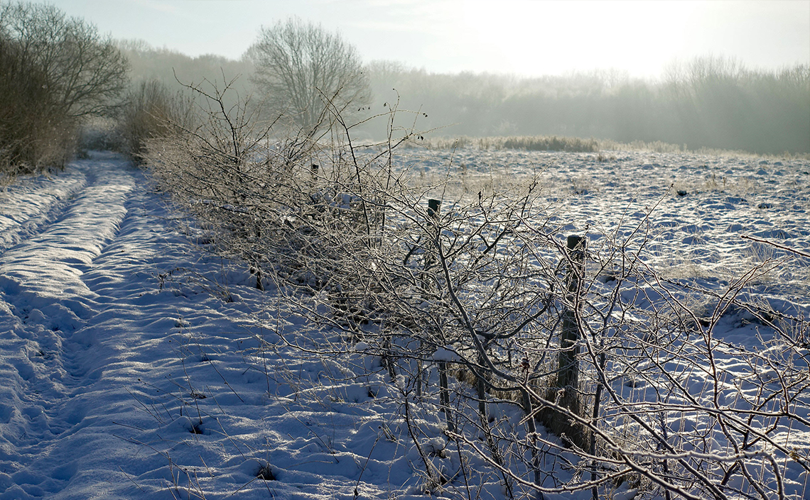 A snowy Ryton Wood Meadows in December 2017 - © 2017-2019 Tony Penycate