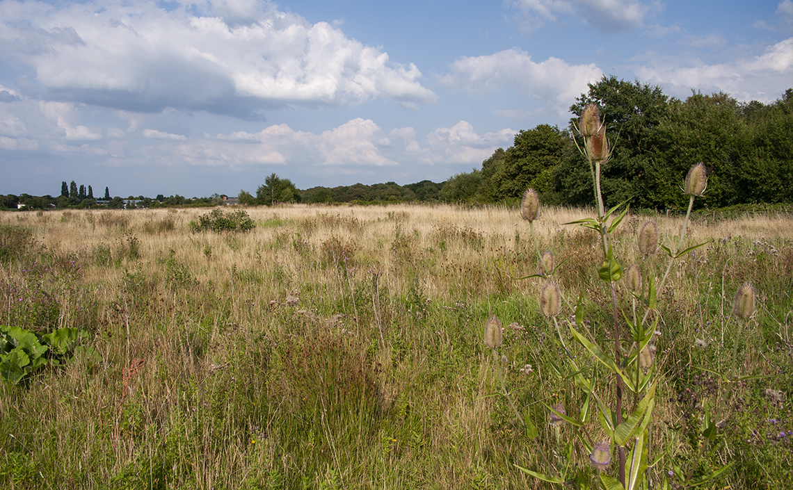 Ryton Wood Meadow in late summer 2009 - © 2009-2019 Steven Cheshire
